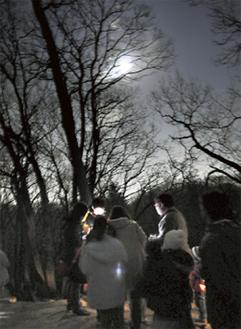 月明かりの森(昨年の様子)