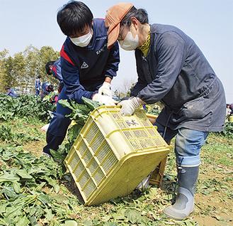 谷本農園でホウレンソウを収穫する川和高校サッカー部員ら