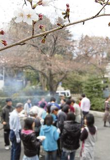 咲き始めた桜の下で行われたバーベキュー