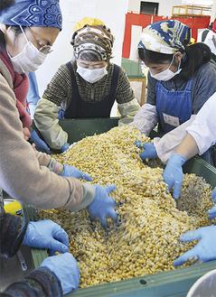 青大豆と麹、塩を混ぜる参加者