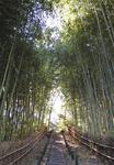 竹林に囲まれた「ふれあいの樹林」