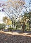 落ち葉の絨毯が気持ちいい「藤が丘公園」
