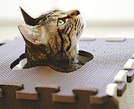 保護猫写真展(企画 猫カフェブラン)