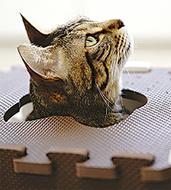 保護猫写真展