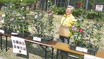 椿の苗木展示即売は毎年人気
