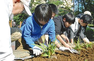 花壇に苗を植える児童ら