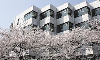 カフェラウンジ前の桜の木