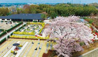 春には桜が満開に。高台の立地から街も一望できる