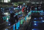 もえぎ野公園の光る池(昨年12月)