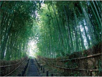 もえぎ野ふれあいの樹林で撮影された「竹林の小径」
