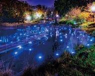 光る池、交流の場に