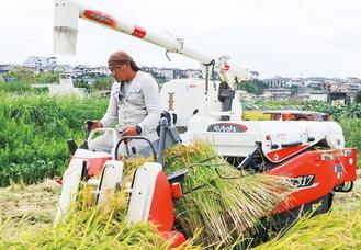 機械で収穫する大貫さん