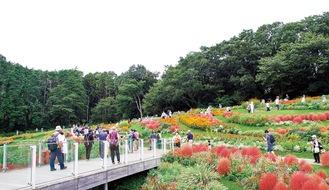 秋の花々で彩られた大花壇