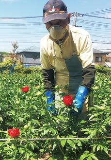 花の生育状況を見る志村さん