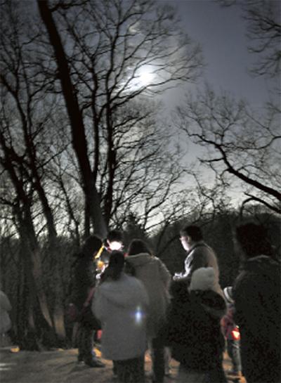 月明かりで森を歩こう