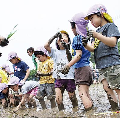 泥んこ授業で米を学ぶ