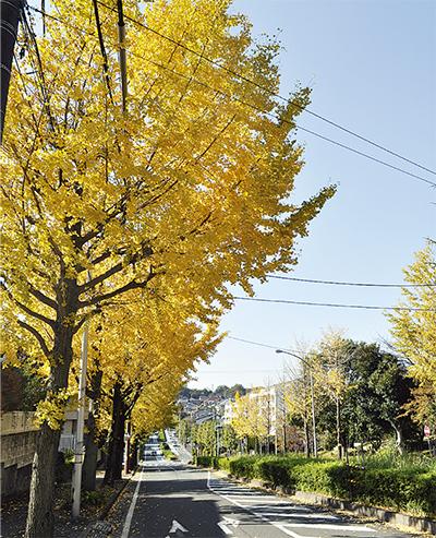 色彩豊かな散歩道
