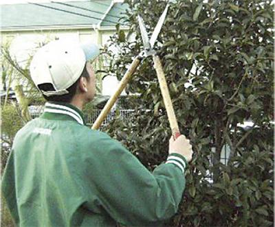 庭木の剪定出張サービス