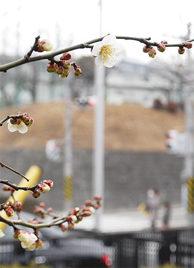 春、すぐそこに