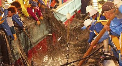 漁業復活の一歩刻む