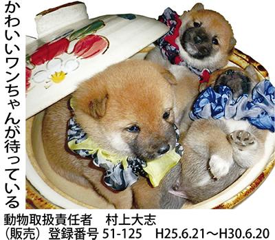 豆柴・極小トイプードル専門店