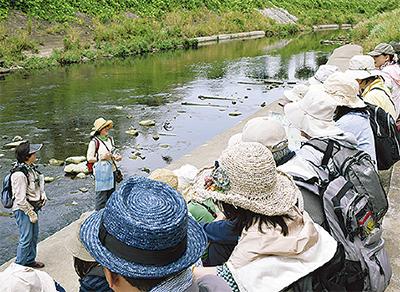 谷本川の自然を学ぶ