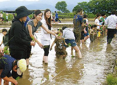 小田原で田植え体験