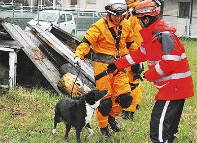 災害救助犬と訓練