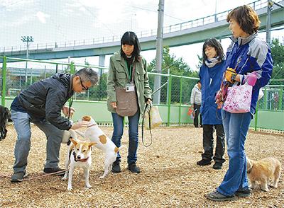 新しいドッグランで遊ぶ利用者と犬たち