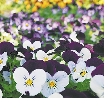 「花を育てる仕事です」