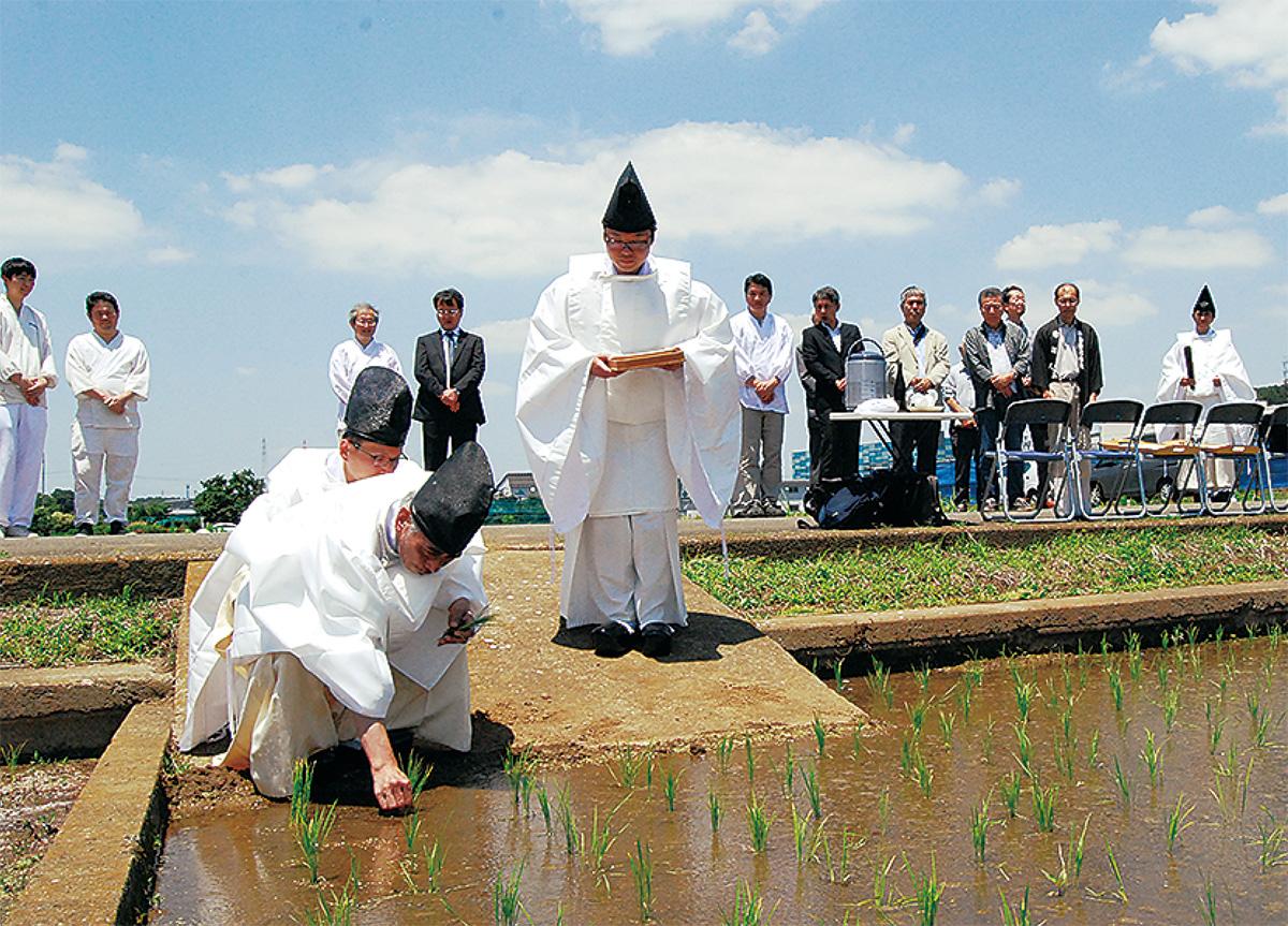 五穀豊穣祈る「田植え」