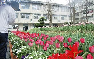 赤、ピンクのチューリップが咲いている中庭。これから黄色の花も咲き始めるという。