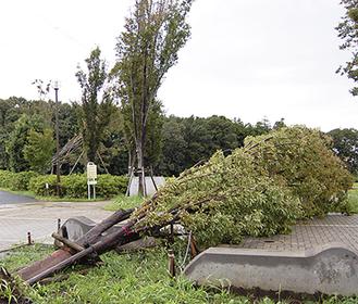 玄海田公園でも倒木が見られた(9月22日撮影)