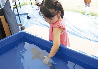 移動水族館のブースでは海の生き物と触れ合った