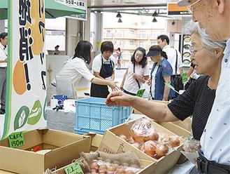 主に緑区で採れた野菜が販売されている