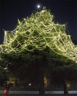1万8千球の光がシンボルツリーを彩る