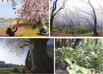 審査員賞を受賞した(左上から時計回りに)「満開の木の下で」「春霞」「小さな自然」「春の散歩道」