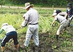 「稲作の会」のご指導のもと稲刈り作業
