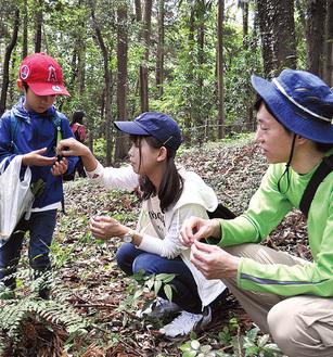 大学生から植物の説明を受ける参加者