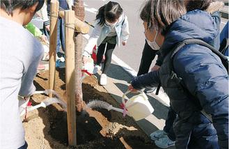 木の根元に水やりをする児童たち