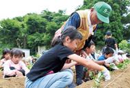 児童らが苗植え体験