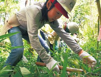 手元に気を付けながら草刈りをする児童