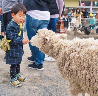 羊に餌を食べさせる園児