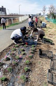 芝桜の苗を植栽する児童ら(同会提供)