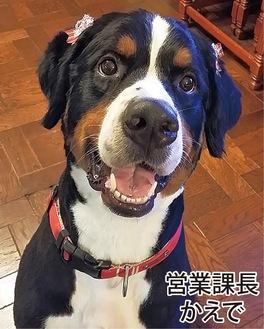 犬が大大大好き、地域密着の同社