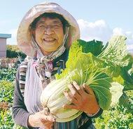 冬野菜を収穫