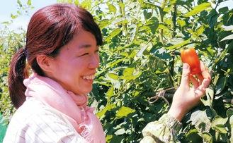 嬉しそうにトマトを収穫する利用者