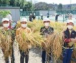 刈った稲を見せる児童