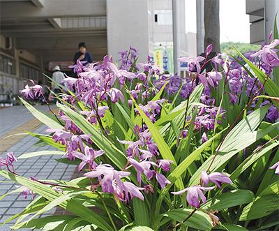 見頃むかえる区の花