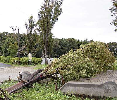 倒木、停電などの被害大